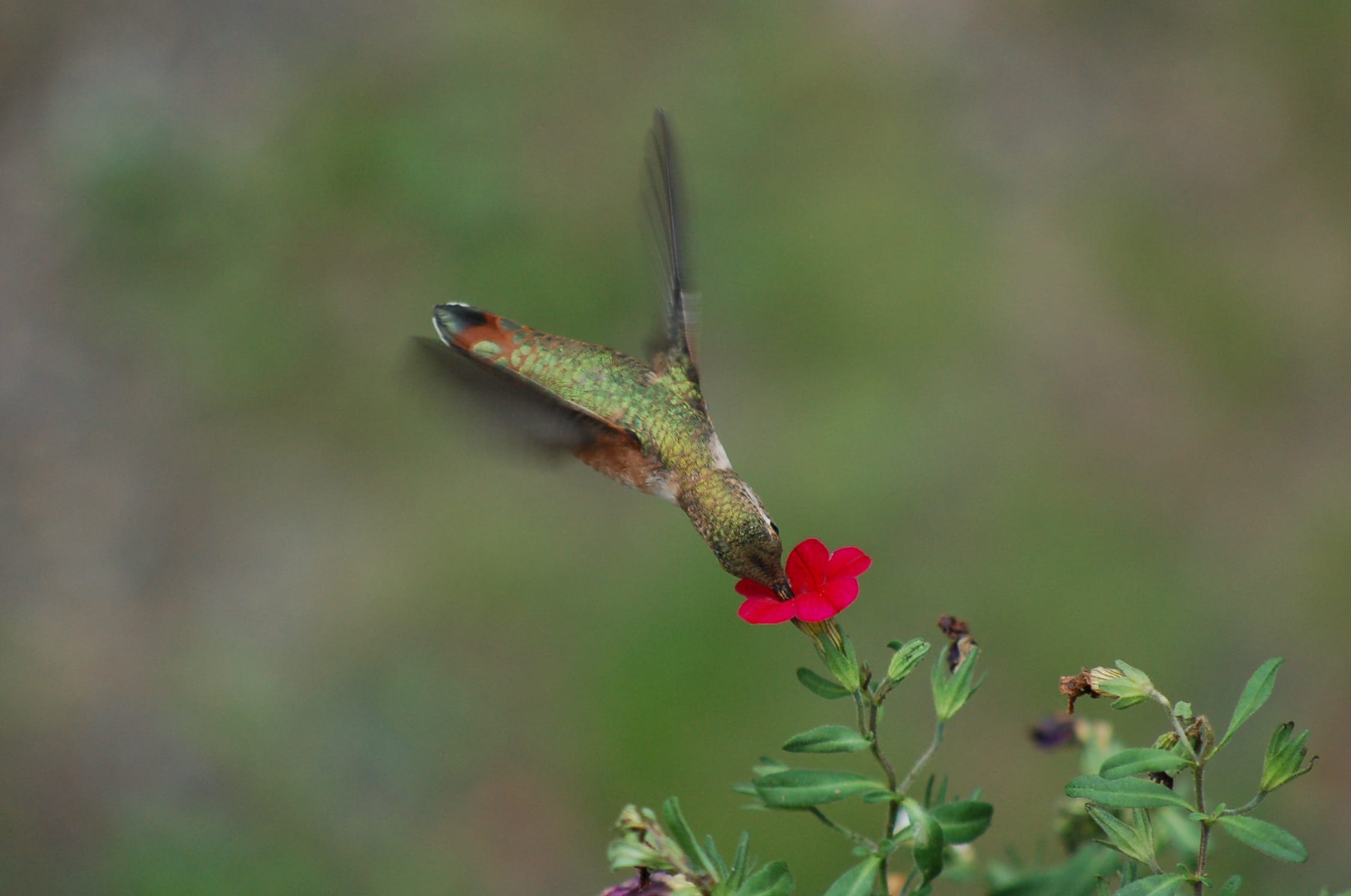 hummingbird- affordable website design for small businesses